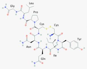 Hormon.oxytocin.kiral.