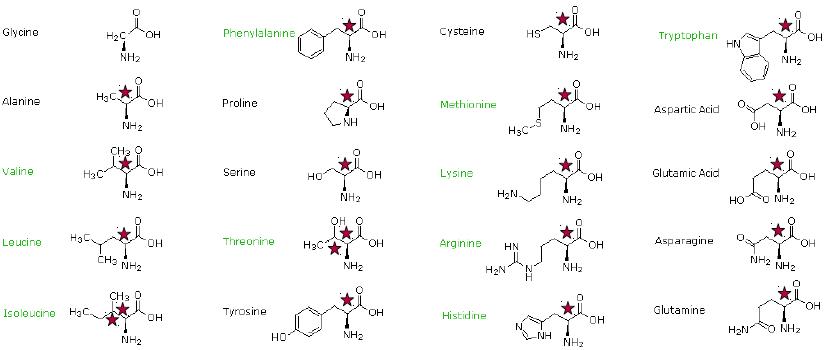 aminosyrer oversigt